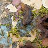 Crustose Lichen?