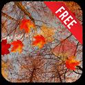 Autumn Maple Live Wallpaper icon