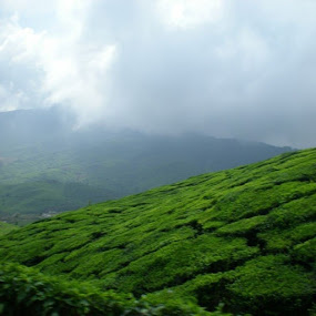 Greenery by Suvra Roy - Nature Up Close Trees & Bushes (  )