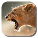 Lion Live Wallpaper icon