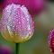 043013-Tulip-Home1-1000px-ss-cln.jpg