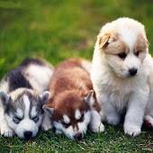 3D cute dogs 1
