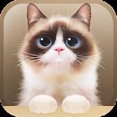 Shui The Kitten Lite