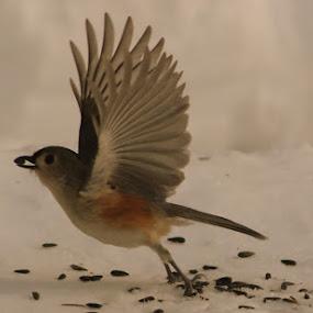 Ready For Take Off by Lee Grubbs Burke - Animals Birds ( flight, lag, lgb, lab, birds )
