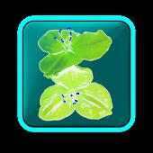 Garden: Flowers free