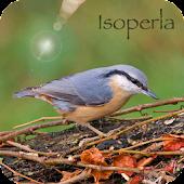 Oiseau Id: Oiseaux de France