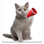 Cat Sounds 6.2 Apk