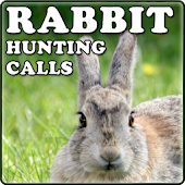 Rabbit Hunting Calls