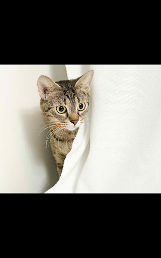 My Photo Wall Kitty cat LWP