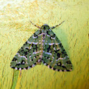Patterned Moth