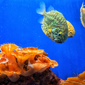 Underwater III by MIhail Syarov - Animals Sea Creatures ( aquatic, underwater, fish, sea, ocean )
