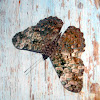 Estaladeira - Cracker Butterfly