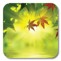 Fallen Leaves Ripple LWP icon