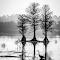WetlandsFL-3661-Edit.jpg