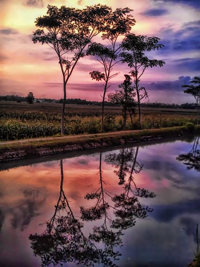 Refleksi Sawah by Randi Pratama M - Instagram & Mobile Android ( reflection, waterscape,  )