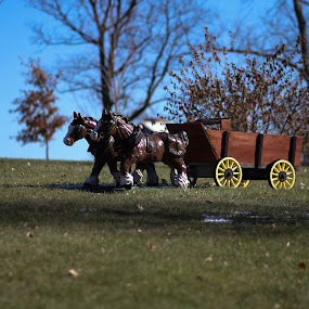 Head West by Edwin Montgomery - Artistic Objects Still Life ( lawn, ornament, horse, wagon, western, sunday morning horse )