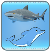 Dolphin And Shark - Free