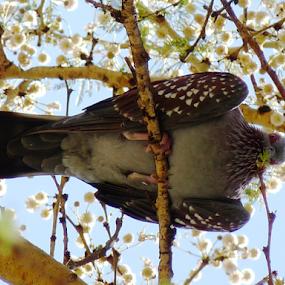 Worm's eye view by Nadir Aziz - Uncategorized All Uncategorized ( bird, tree, wings, nest, high, perch,  )