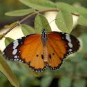 Monarca Africano