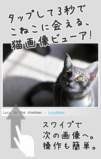 すぐねこ - 3秒でこねこに会える シンプル猫画像ビューア