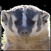Whack a Badger
