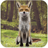 Talking Fox APK for Bluestacks