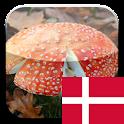KinoPad Danish – Image Search logo