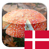 KinoPad Danish - Image Search