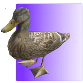Feed the Duck 3D