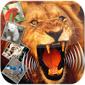 Animal sound - Zoological Park icon