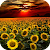 Sunflower Live Wallpaper file APK for Gaming PC/PS3/PS4 Smart TV