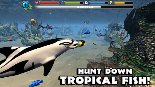 Dolphin Simulator image   9