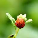 wet ladybug