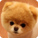 Kids Cute Animal Puzzle icon