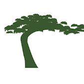 Tree Inn