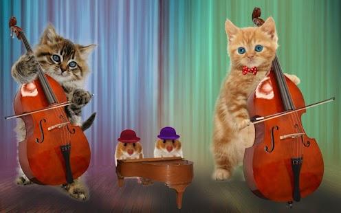 Znalezione obrazy dla zapytania kot gra na akordeonie
