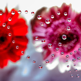 heart of love by Einar Bjaanes - Abstract Water Drops & Splashes ( love, water, heart, flower, norway )