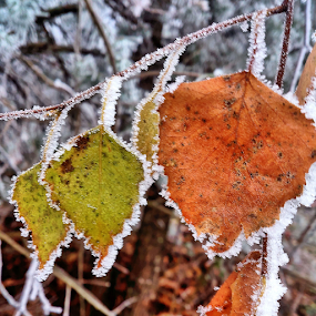 Mr Frost by Oliver Švob - Instagram & Mobile Android ( snapshot by malioli, , color, colors, landscape, portrait, object, filter forge, fall, colorful, nature )
