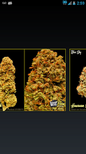 Weed Maps Marijuana Strains - screenshot thumbnail