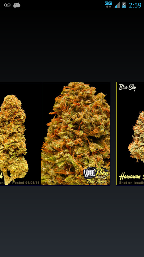 Weed Maps Marijuana Strains - screenshot