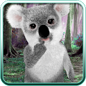 Talking Koala Bear icon