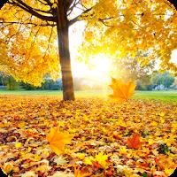 Maple Leaf Live Wallpaper FREE 1.0.9