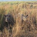 One-horned Rhinocerous