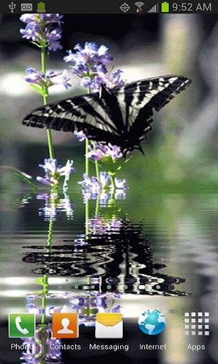 Butterfly in Swamp LWP