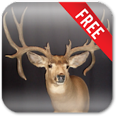 Deer Hunting Live Wallpaper