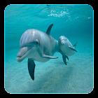 Delfines Fondo Animado icon