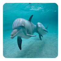 Dolphins Live Wallpaper 4.2