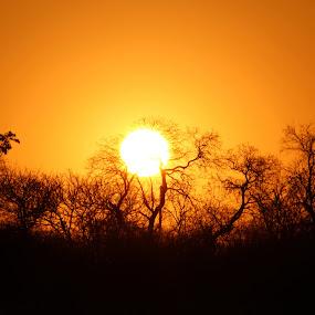 Sunset in the bush by Arun Prasanna - Landscapes Cloud Formations ( #unique sunset #corona #silhouette #sun #dusk )