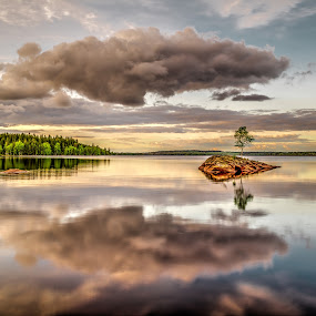 Lonely Tree by Colin Harley - Landscapes Waterscapes ( water, tree, forest, lake, island )