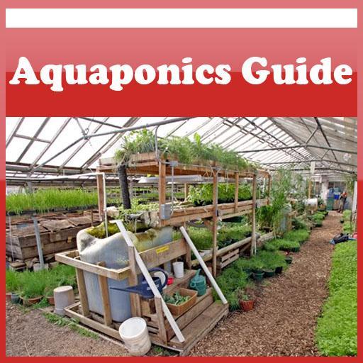 How To Create Aquaponics Guide